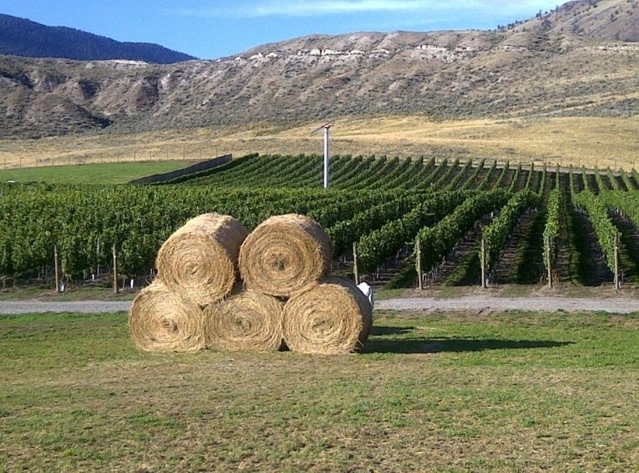 Kamloops Wine Trail,