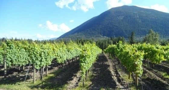Shuswap Wine Trail,
