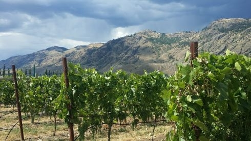 Wild West Wine Tour,
